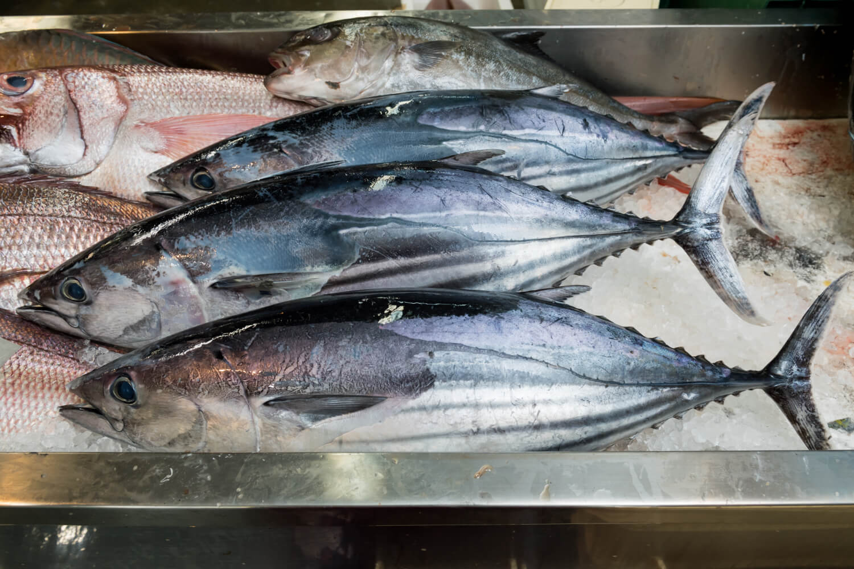 Spearfishing laws okinawa Spearfishing Laws