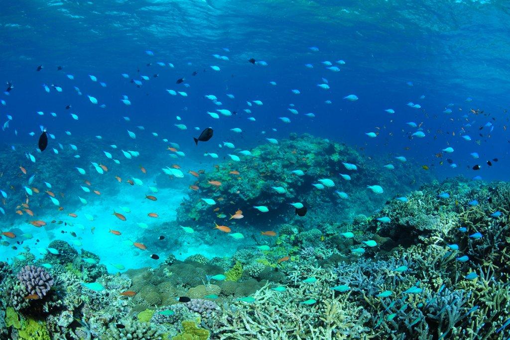 Snorkel Image
