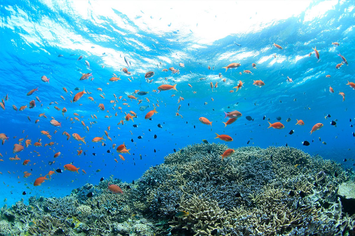 Snorkel Guide Image