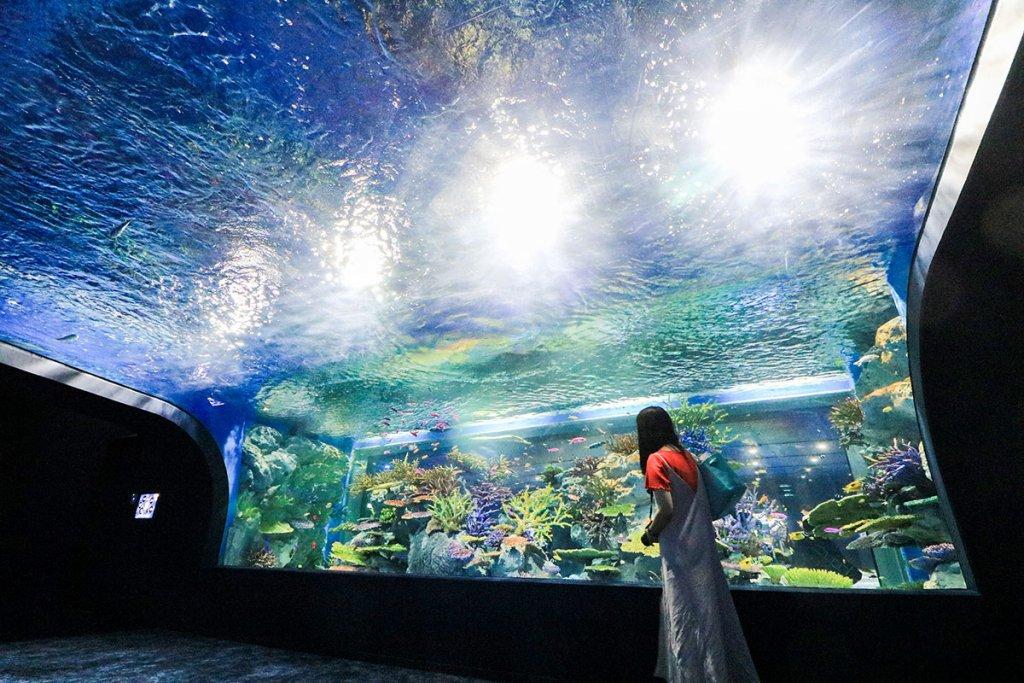 DMMkariyushi Aquarium image