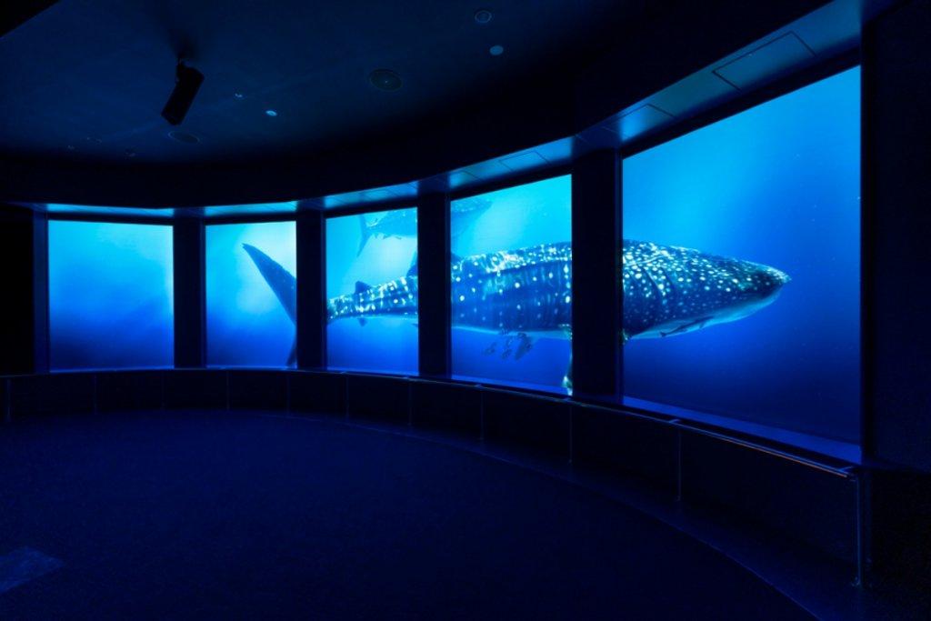 DMMkariyushi Aquarium