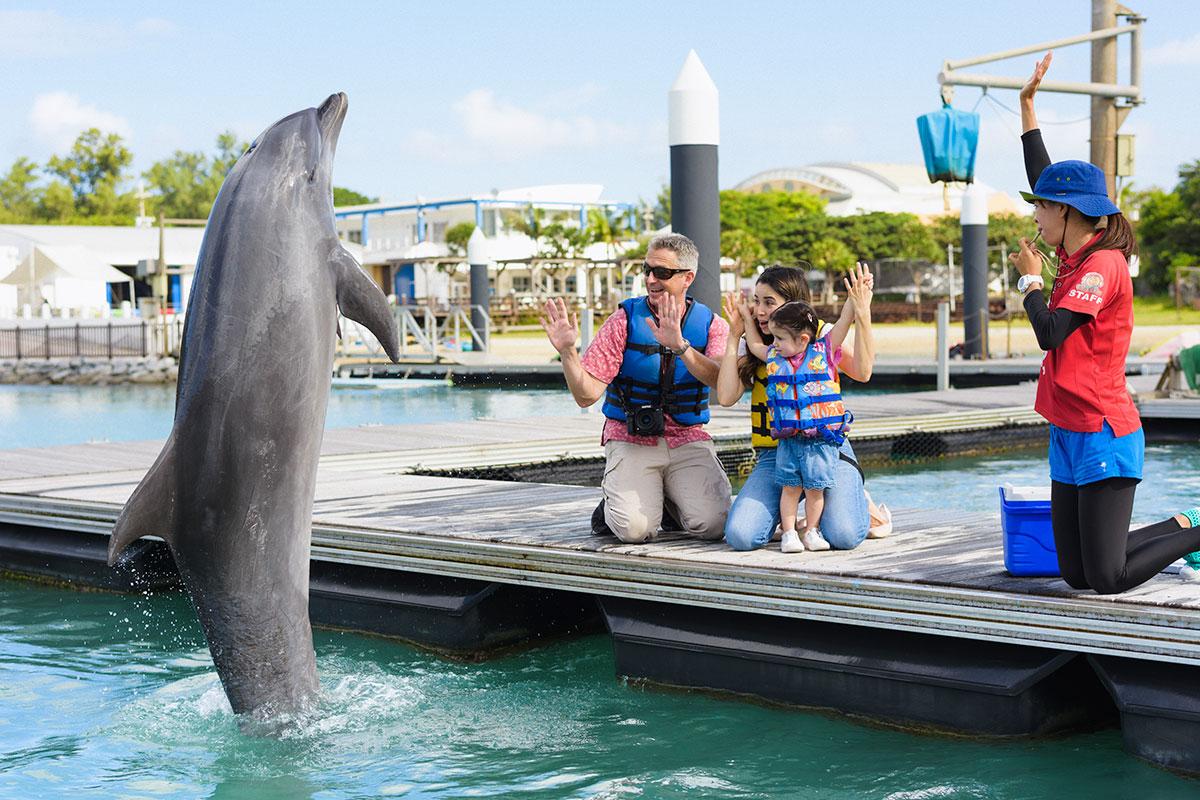 enjoying dolphin programs