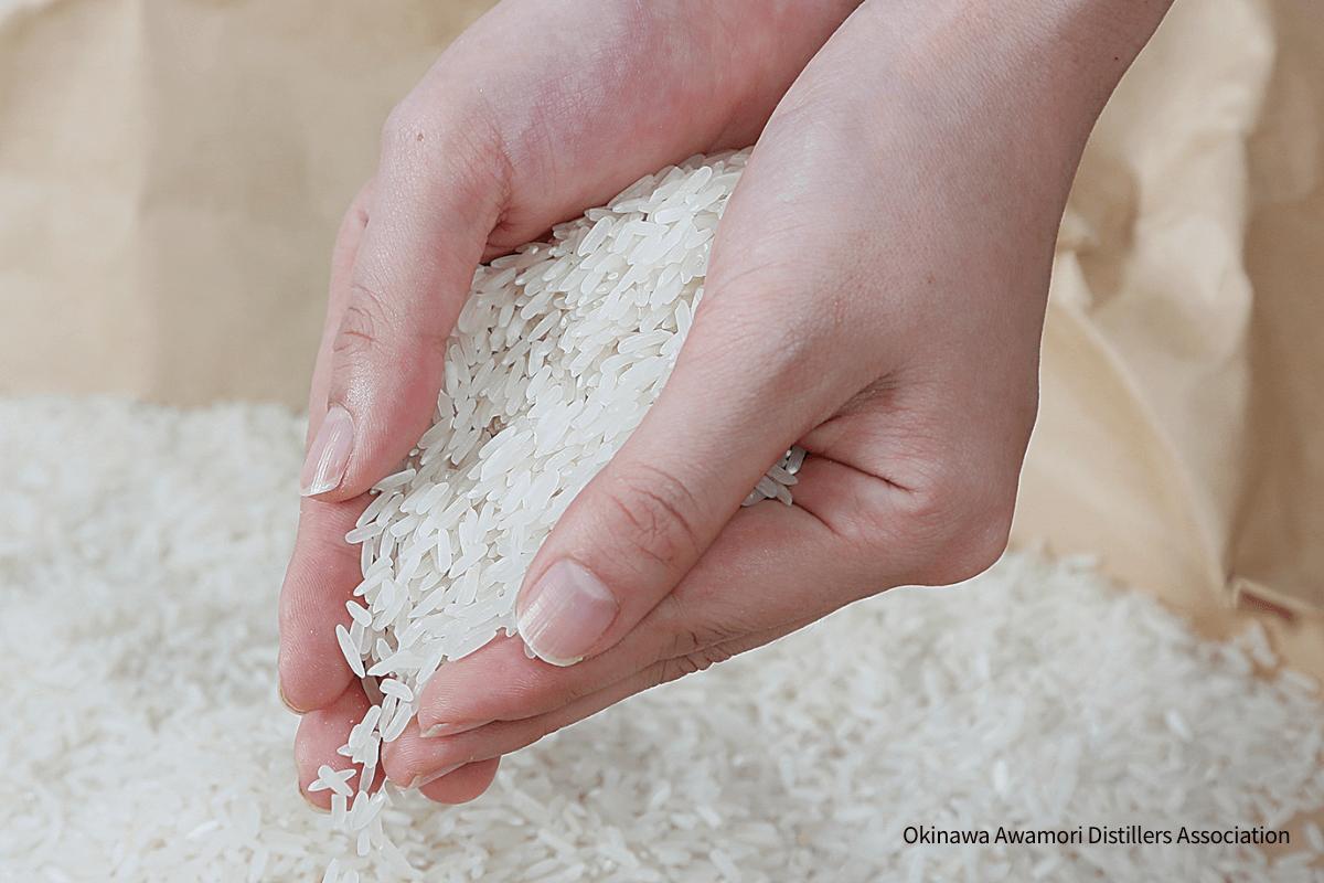 Indica rice