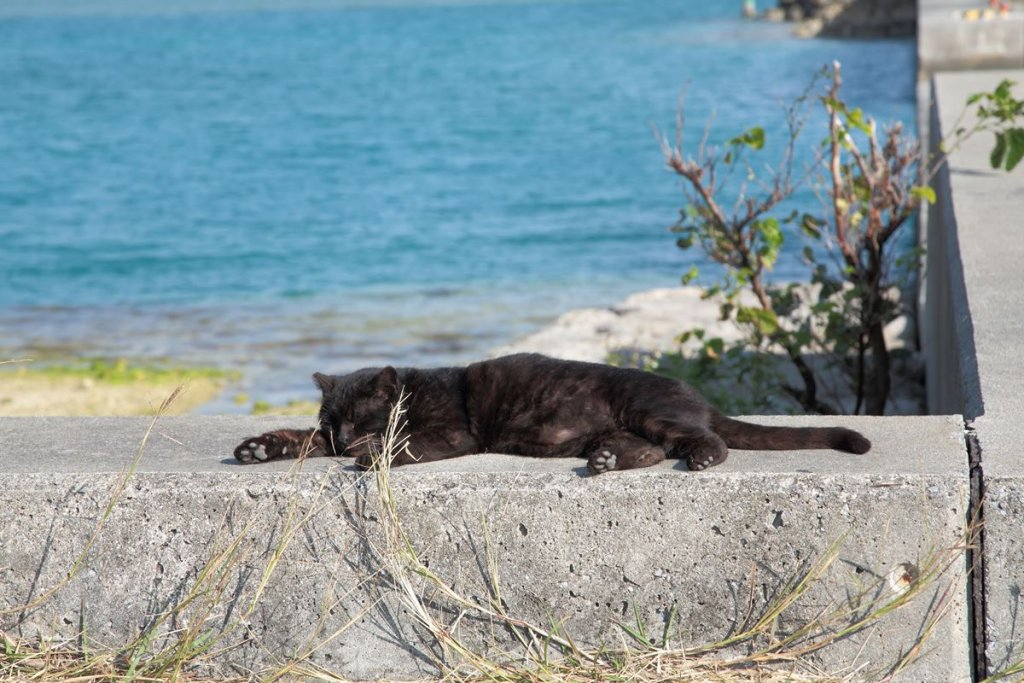 Relaxing cats